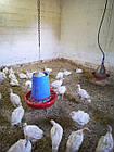 Бункерная кормушка для индюков, гусей, уток Manola-Т, фото 3