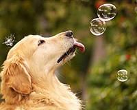 Алмазная живопись Игривый щенок 40 х 30 см (арт. FS895) вышивка стразами