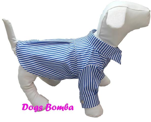Рубашка для собак голубая в полоску