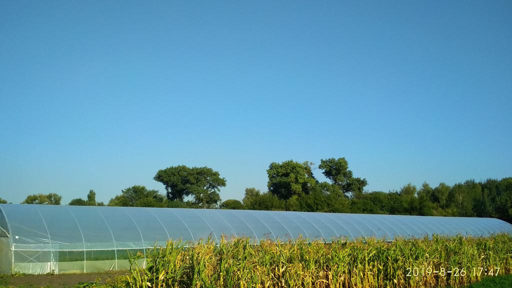 будуємо фермерські теплиці великих розмірів