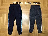 Брюки для девочек велюровые утепленные оптом, F&D, 8-16лет, арт. YF-8520., фото 1