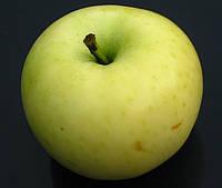 Яблоня Белый Налив. (54-118). Летний сорт.