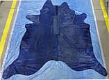 Синяя коровья шкура на пол, экзотические шкуры коров хай тек, фото 3