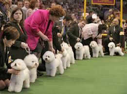 В 2017-м в Киев приедут тысячи породистых собак из Европы