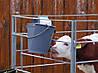 Ведро с резиновой соской для кормления телят, фото 3