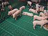 Пластиковая щелевая решетка пола 600х400 мм для свинарника, фото 4