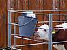 Ведро с резиновой соской для телят, Kerbl Германия, фото 2