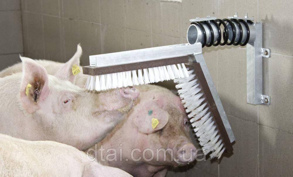 Щетка-чесалка для свиней