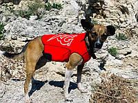 Гидрокостюм для собак Katrangun; индивидуальный пошив