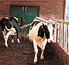 Запасная щетка для щетки-чесалки для крупного рогатого скота, фото 2