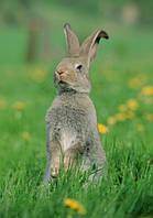 Оборудование для Кролики & Грызуны