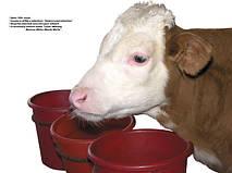Поилки для крупного рогатого скота