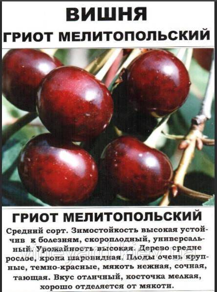 Вишня, сладкий сорт, с черешней, гибрид, обрезка, формировка, Киев, самовывоз, контейнер, Мартусовка, слива, черешня, персик, абрикос, ананасный, прививка, окулировка, декоративные, деревья, плодовые, украшение, сакура, антипка, магалебка, ВСЛ-2, срок созревания, вкусная для дачи, дома, двора, огорода, на участке, выносливая, устойчивая, коккомикоз, монилиоз, экспорт, заморозка, земля, сад, Мелитополь, урожайность, листья, корень,