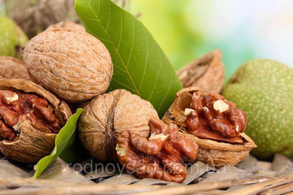 Выращивание грецкого ореха в Украине