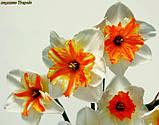 Нарцисс Trepolo (Треполо) крупнокорончатый, фото 6