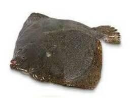 Камбала азовская крупная вес 1,5 - 2,5 кг/штука