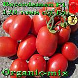 Семена, томат Рекордсмен f1 EZ 7009 (1000 семян) ТМ Libra Seeds (США), фото 2