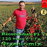 Семена, томат Рекордсмен f1 EZ 7009 (5000 семян) ТМ Libra Seeds (США), фото 3