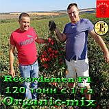 Семена, томат Рекордсмен f1 EZ 7009 (5000 семян) ТМ Libra Seeds (США), фото 4