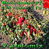 Семена, томат Рекордсмен f1 EZ 7009 (5000 семян) ТМ Libra Seeds (США), фото 5
