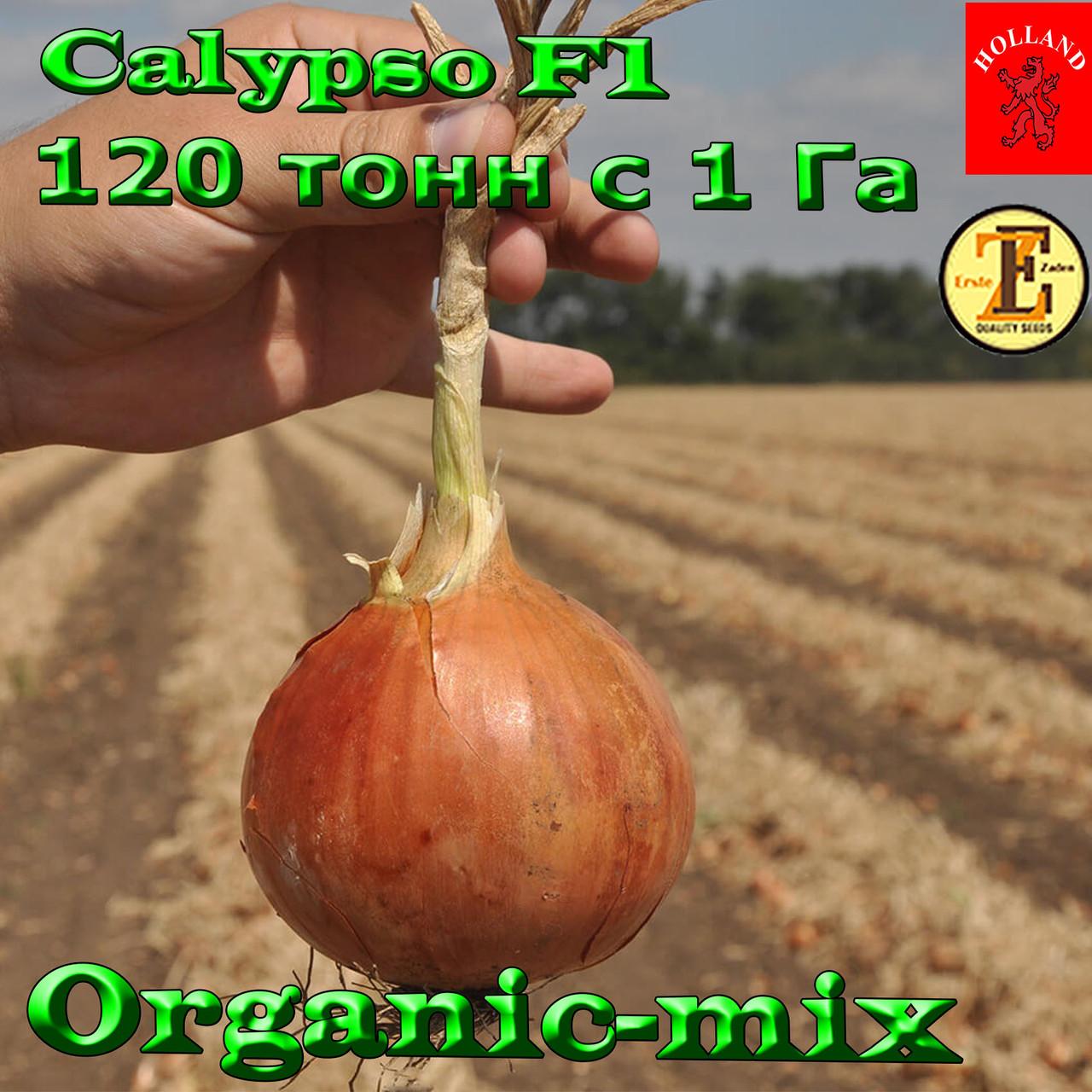 Высокопродуктивный Лук Калипсо F1, ТМ  ТМ Erste Zaden, 250 000 семян, проф.пакет, фото 1