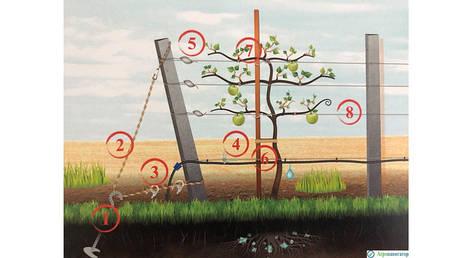 Средства для крепления растений