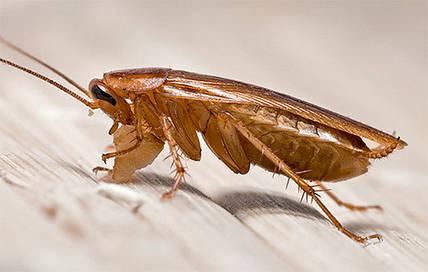 Борьба с тараканами: современные методы борьбы с тараканами в квартире