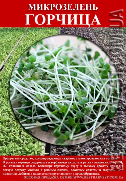 Семена Горчицы на микрозелень 100 г
