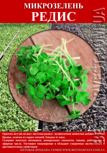 Семена Редиса на микрозелень 100 г