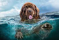 Пазл Сastorland на 1000 элементов Пес в воде, фото 1