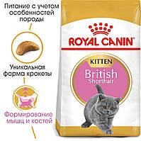 Royal Canin Kitten British Shorthair 2кг -корм для кошенят британської короткошерстной