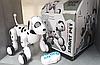 Интерактивная собака робот Robot Dog Smart Pet на радиоуправлении, далматинец + подарок, фото 5