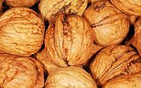 Прививка грецкого ореха, как способ размножения растения