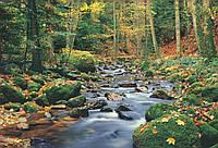 """Фотообои: """"Лесной ручеек"""", 366х254 см, 8 частей"""