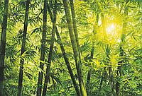 Фотообои: Бамбуковый лес, 366х254 см, 8 частей, фото 1