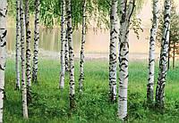 Фотообои: Северный лес, 366х254 см