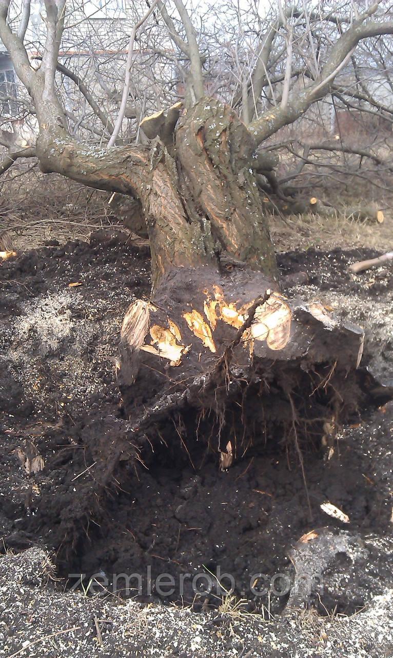 Выкорчевать корень дерева в Харькове и области