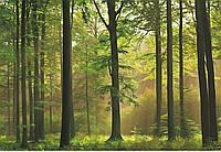 Фотообои: Осенний лес, 366х254 см, 8 частей