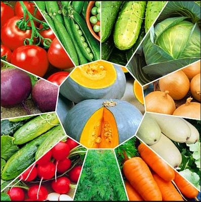 Семена овощных, плодовых и ягодных культур, трав и зелени.