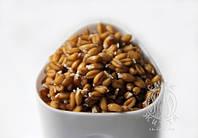 Проростки пшениці (органічної) (100г)