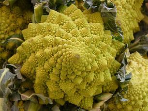 Уцінка (термін до 02.2021 р) Капуста броколі Романеско, 0,5 р. СЦ Традиція, фото 3