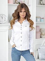 Блуза   классическая с черной пуговицей в расцветках  55003
