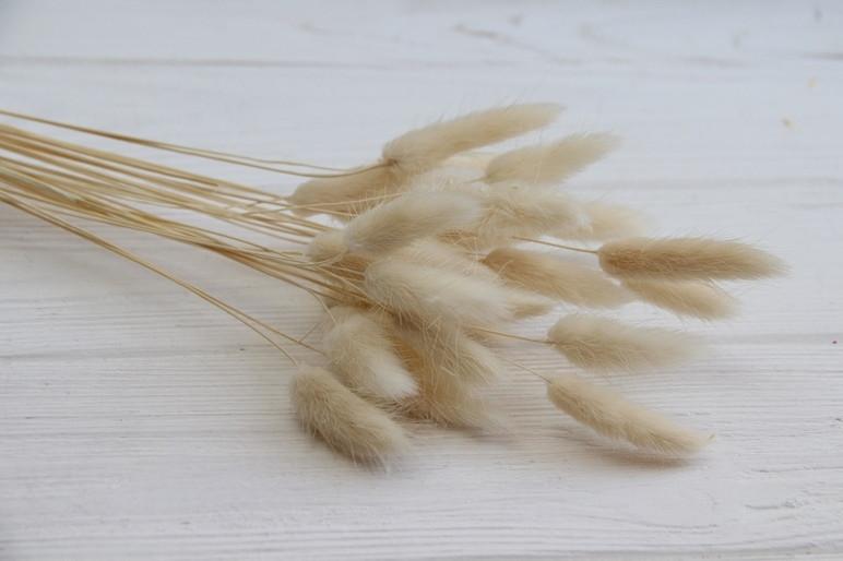 Лагурус стабилизированный , бежевый  ( натуральный цвет )    60 шт