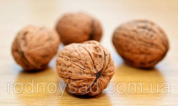Какая почва для грецкого ореха более подходящая