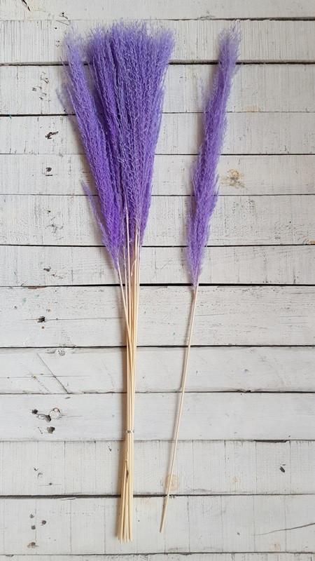 Сухоцвет Кортадерия  ( пампасная трава )  ,   фиолетовый              10 шт