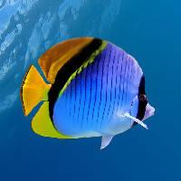 Подводный мир и рыбы