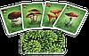 Настольная игра ГрибОК 800170, фото 5