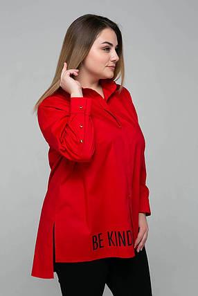 Модная женкая рубашка с удлиненой спинкой из коттона  54 по 60  размер, фото 2
