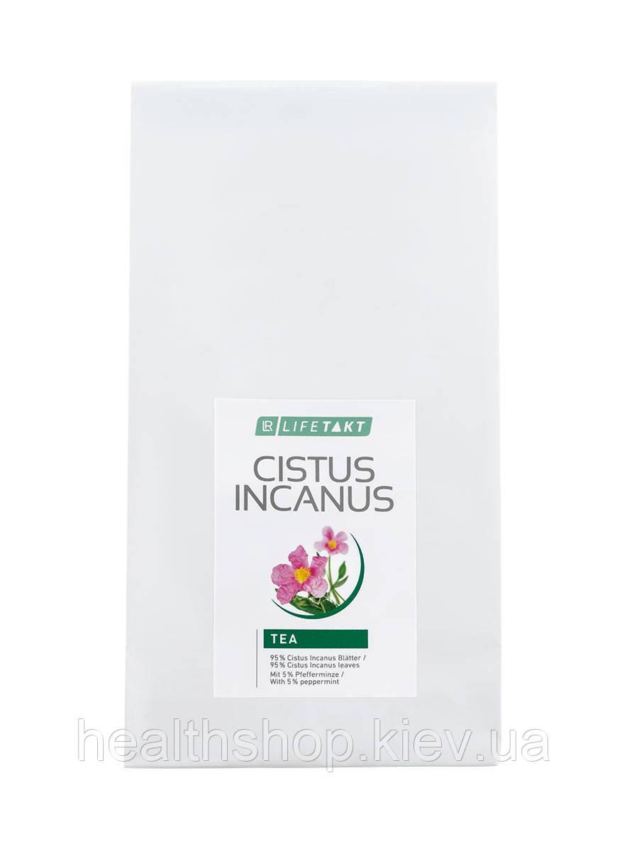 Травяной чай из Ладанника, Cistus Incanus