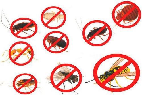 Дихлофос - Инсектицид «Морфей» без запаха универсальный озоно неразрушающий.От комаров, от муравьев, от мух, от тараканов, от моли, от клопов, от ос, от пауков.